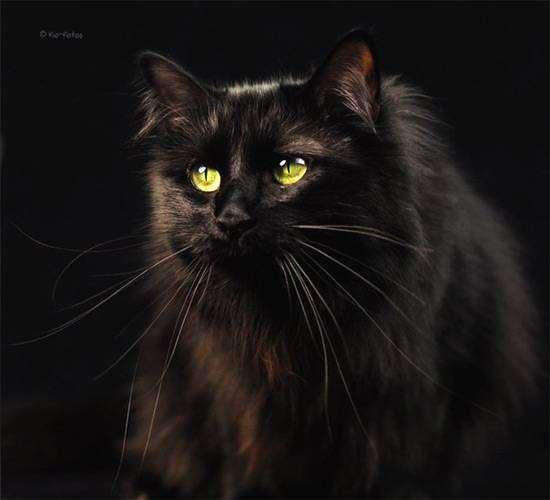Глаз кошки какого цвета глаза у кошки