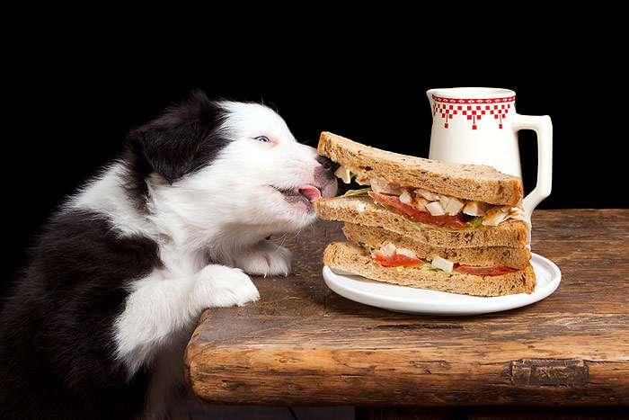 Особенности сбалансированного питания собак, готовые корма собак ... d8563d4b2f3