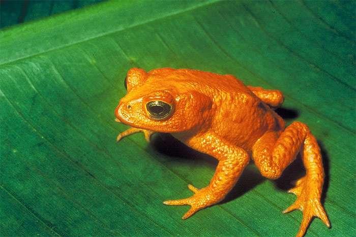 Реферат жабы и лягушки 7535