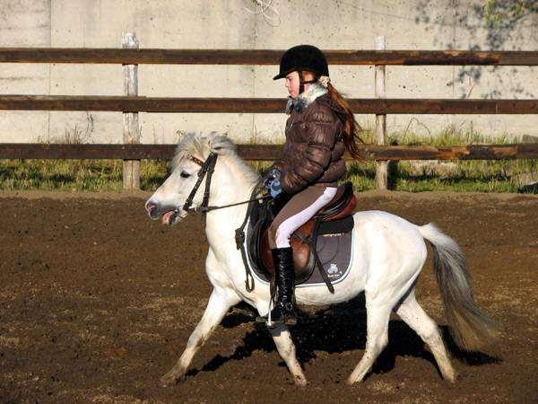 Девочка едет на пони, фото лошади фотография