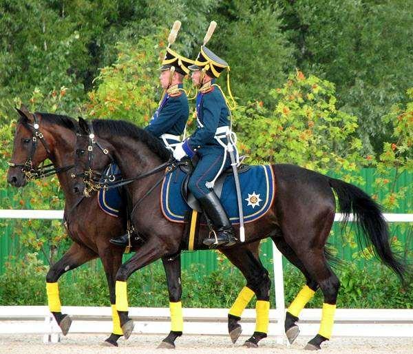 Президентский полк на параде, фото верховая езда фотография