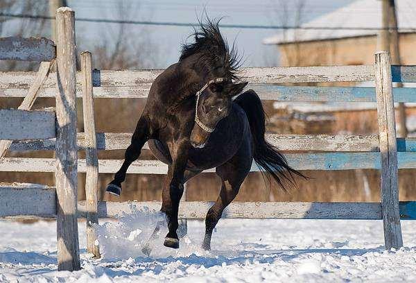 Лошадь, фото лошади фотография