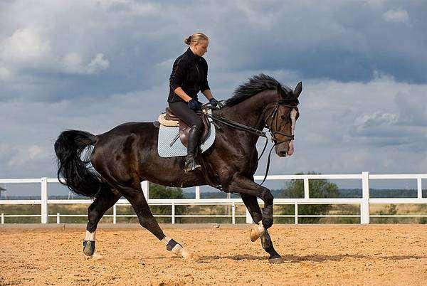 Лошадь под всадником, фото лошади фотографии