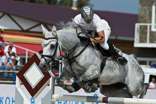 Всадник на лошади, преодолевающий препятствие, фото фотография