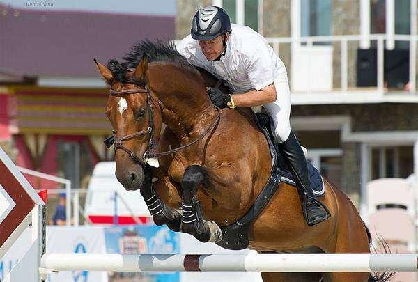 Лошадь под всадником, фото лошади фотография
