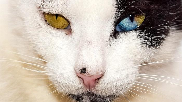 Болезни суставов кошек в старости избавиться от боли в суставах у пожилого человека