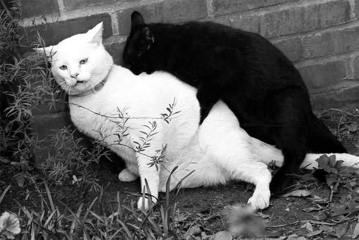 Секс и коты