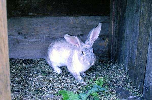 Кролик, фото фотография зайцеобразные животные