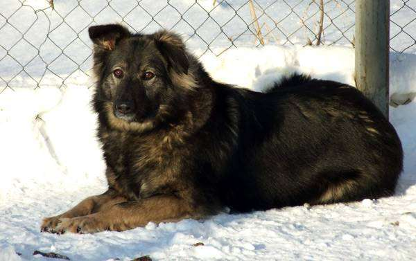 Дворняга на снегу, дворняжка, фото собака фотография