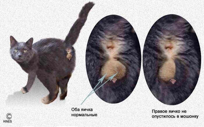 какой тип у кошек