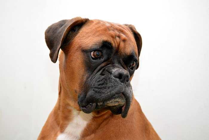 Отслоение хряща в плечевом суставе у собаки лечение отзывы восстановление суставов лекарства
