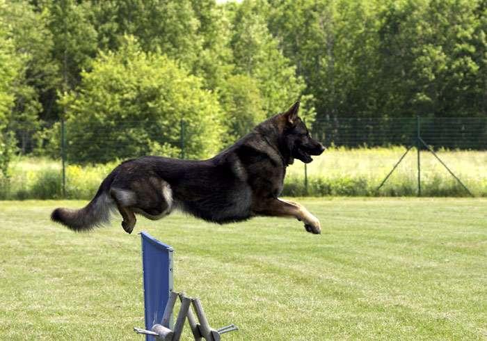 Картинки по запросу IPO собака