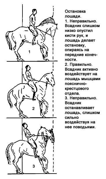 Простатит при езде на лошади смотреть как пользоваться массажером простаты
