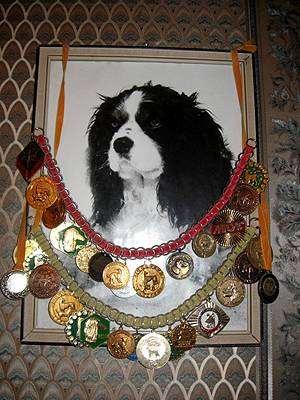 Первый кавалер-кинг-чарльз спаниель в России - Хэрби Фон Дуглас (1985-1999), фото породы собак фотография)