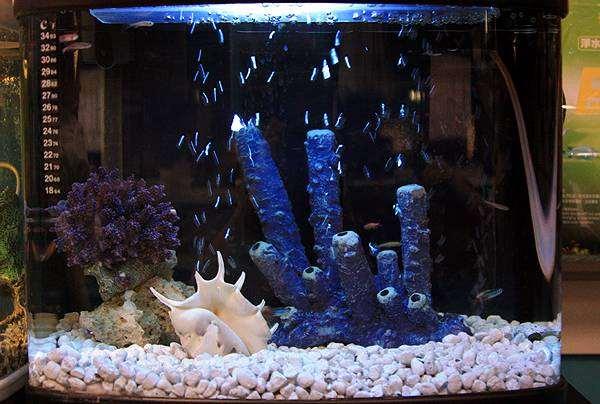 Морской (рифовый) аквариум