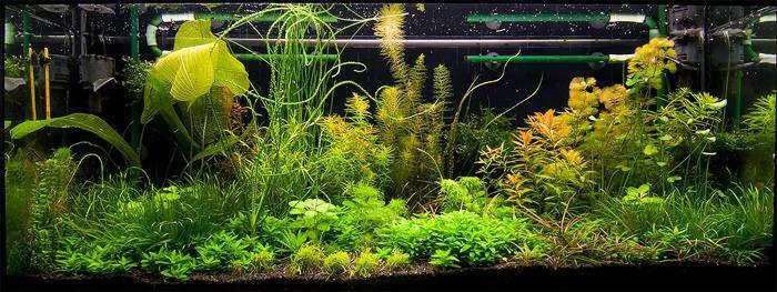 Голландский аквариум, фото