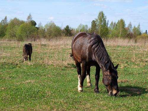 Пасущаяся лошадь, фото фотография лошади