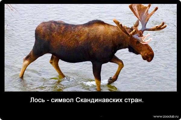 Анекдоты Про Лося Бесплатно