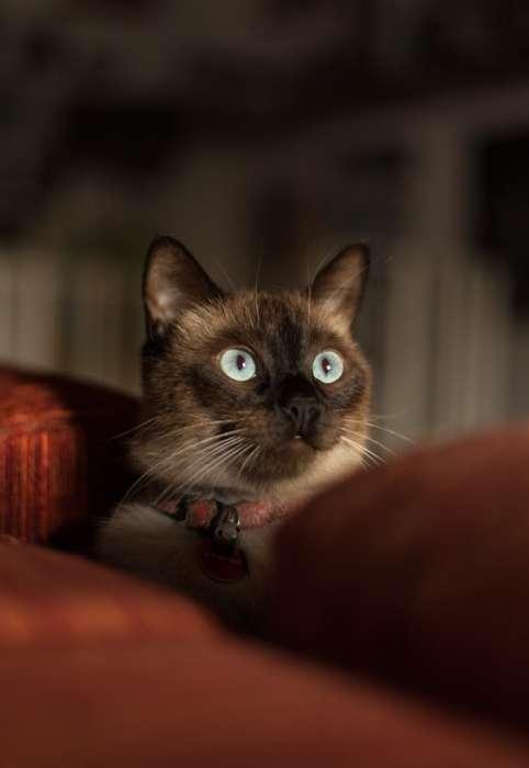 Реферат с картинками на тему кошки 5875