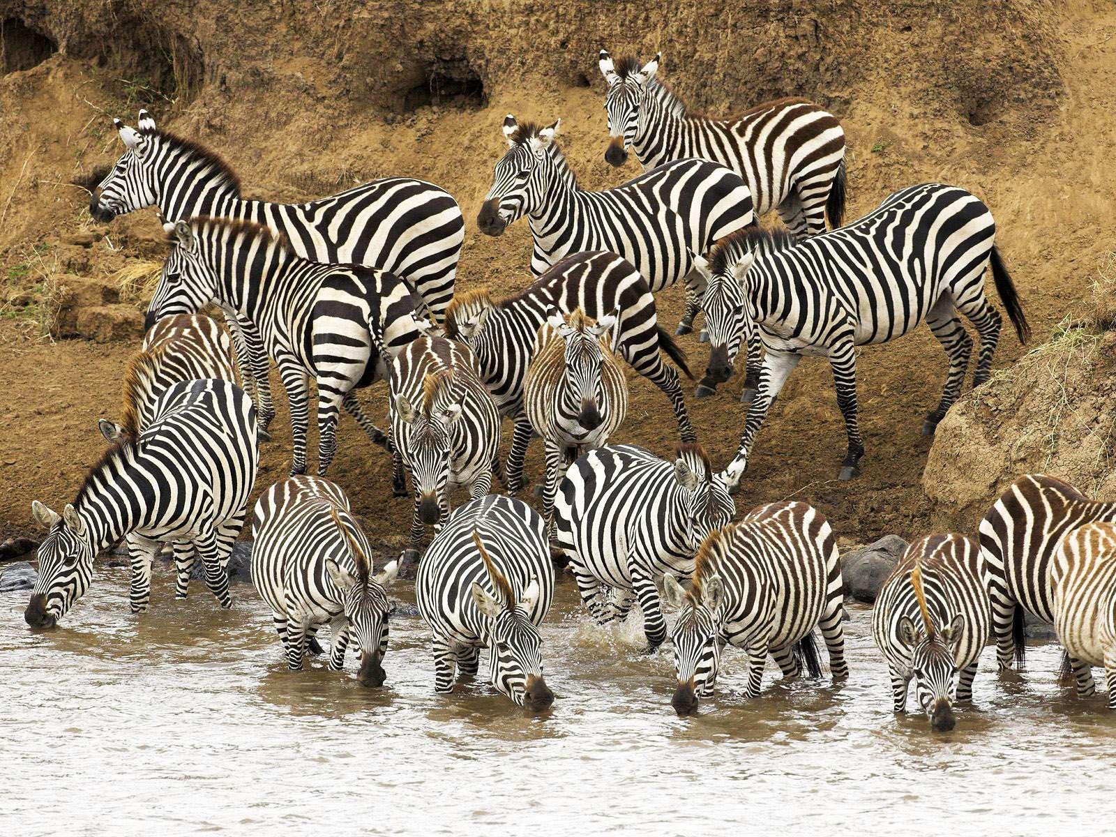 Реки мара кения фото картинка
