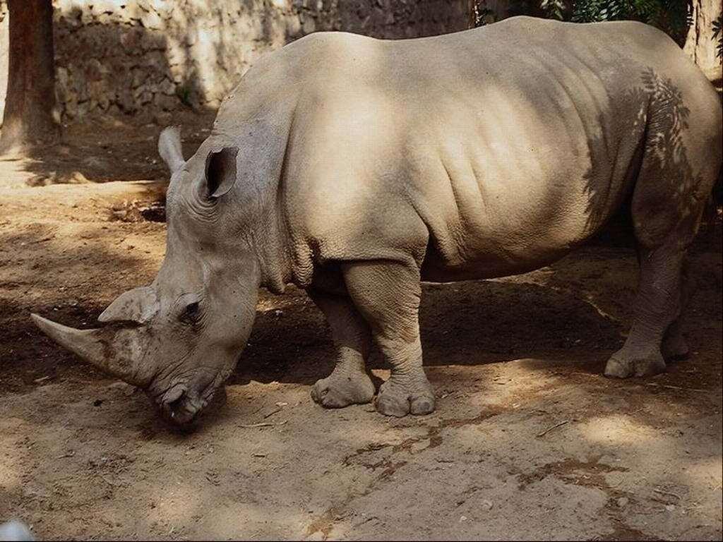 Порно рассказы про носорогов