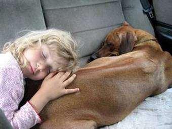 Родезийский риджбек и ребенок, фото собаки, фотография породы собак