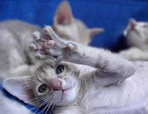Купить кошку, цена котенка, фото котенок