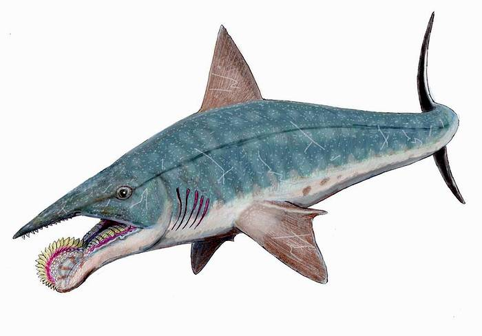Геликоприон (Helicoprion), реконструкция, фото фотография рыбы