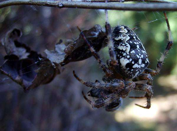 Паук в паутине, фото новости о животных паукообразные фотография