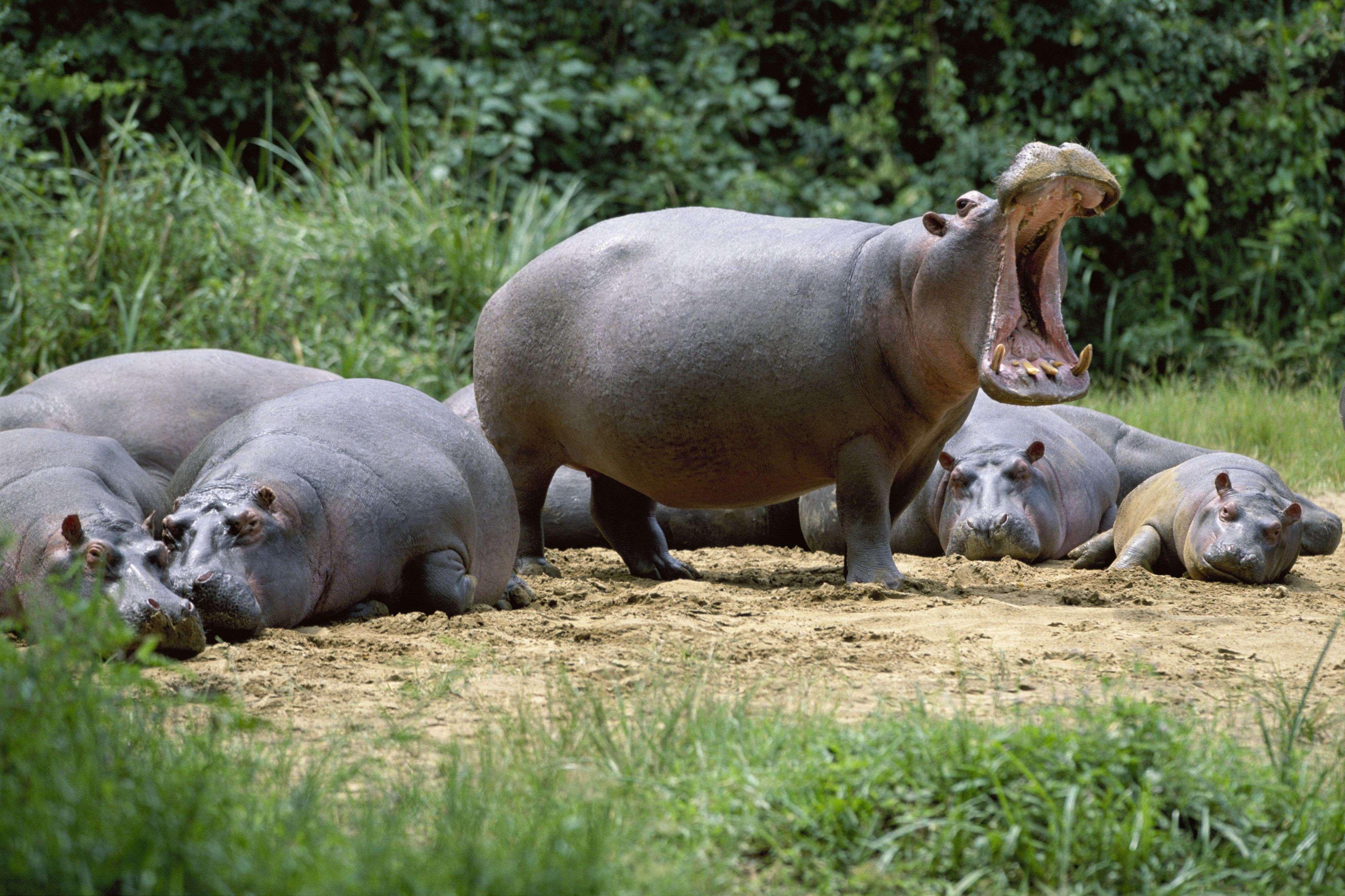Самые большие животные планеты  ZooPictureru