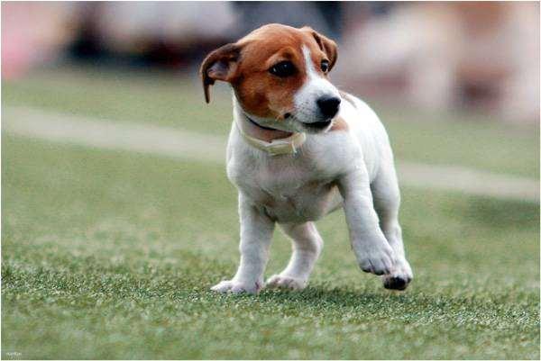 Щенок, фото новости о животных фотография собаки