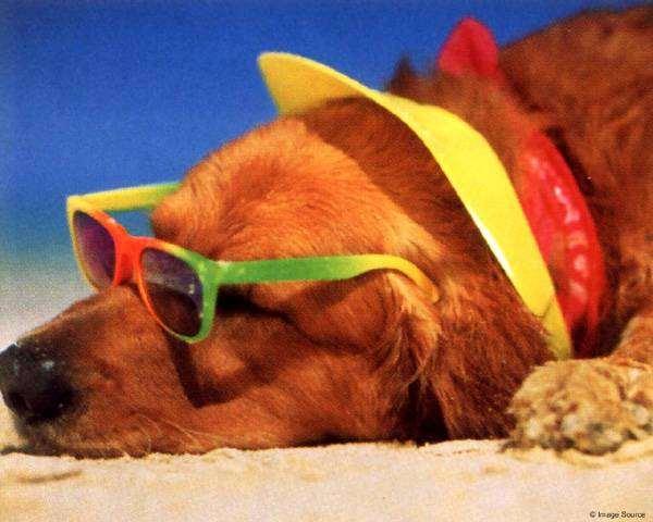 Пес на пляже, фото новости о животных собаки фотография