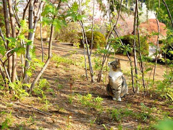 Кошка на даче природе, фото фотография везем кошку собаку на дачу