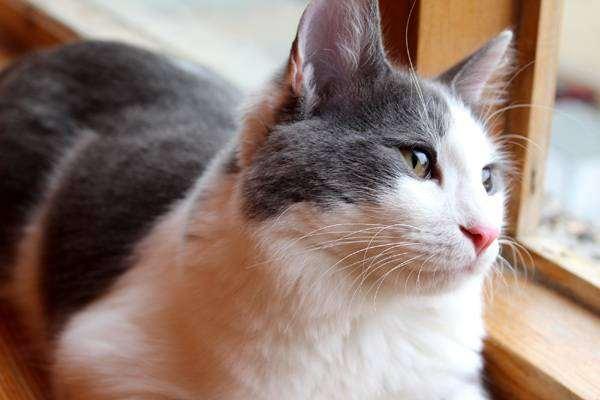 Домашний кот стресс