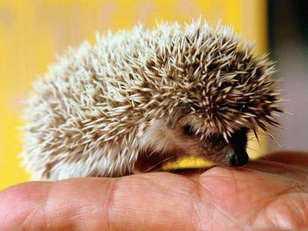 Домашние животные - Фото домашних животных - Виды 36
