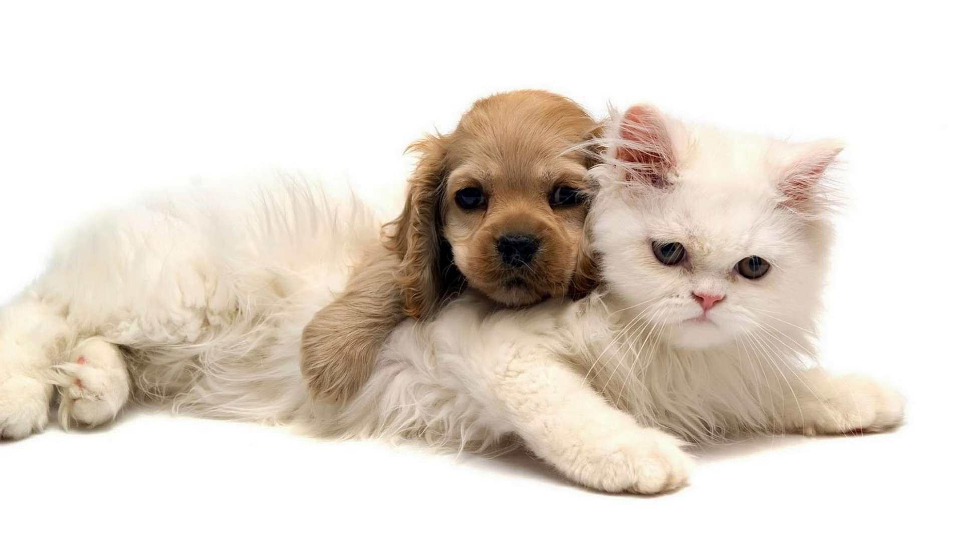 Главная → фото → фото обои животных
