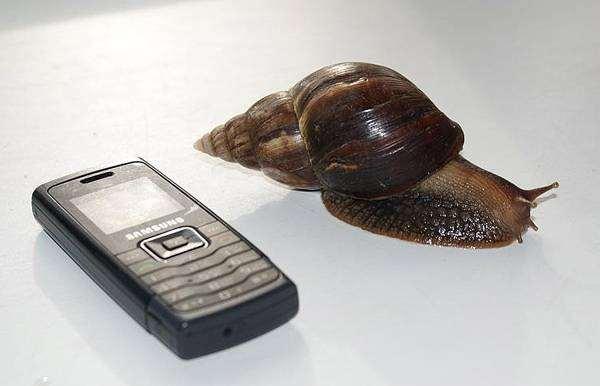 Размеры улитки ахатины, фото моллюски беспозновочные фотография