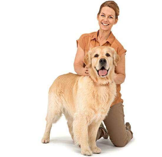 К чему привели 100 лет улучшения породистых собак