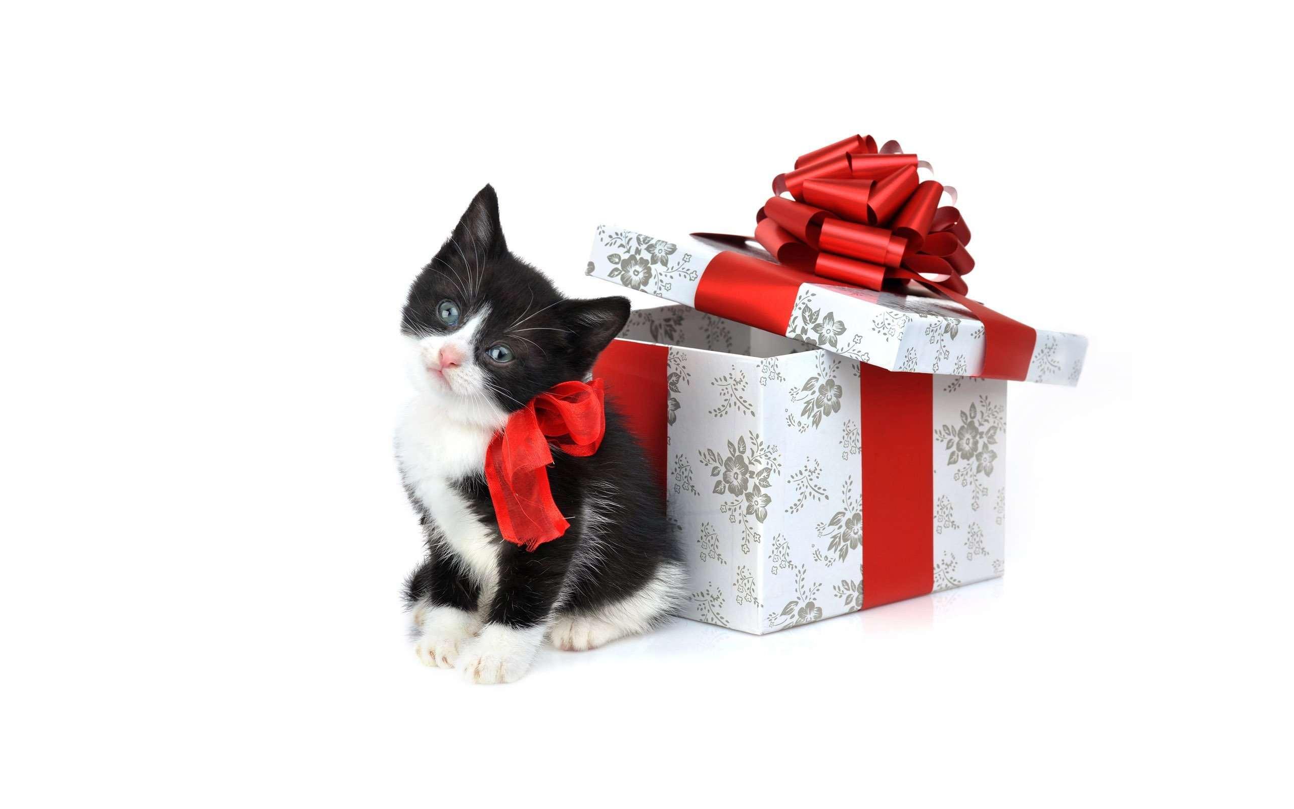 Подарок животное статьи