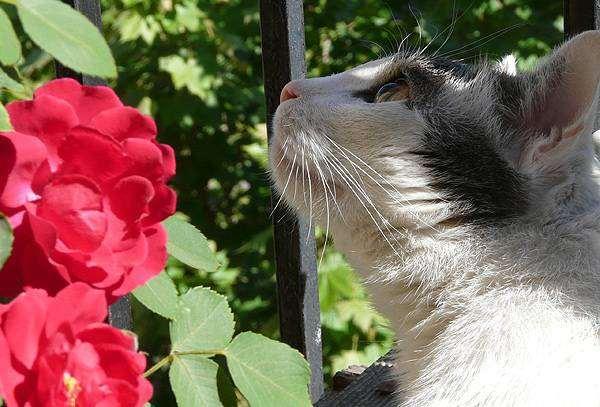 Кошка и цветы, фото вопросы о кошках фотография