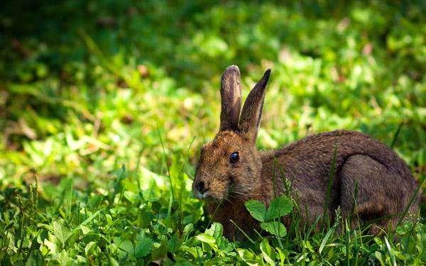 Заяц, фото фотография животные