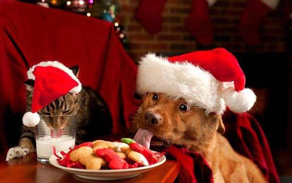 Кошка и собака за праздничным новогодним столом, фото смешная новогодняя картинка фотография
