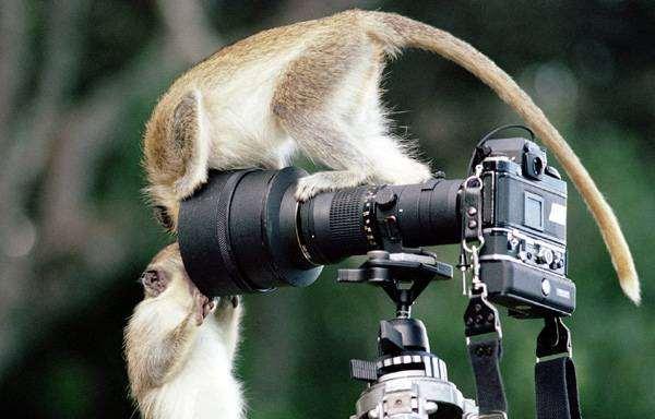 Обезьяны рассматривающие фотоаппарат, фото смешная картинка фотография