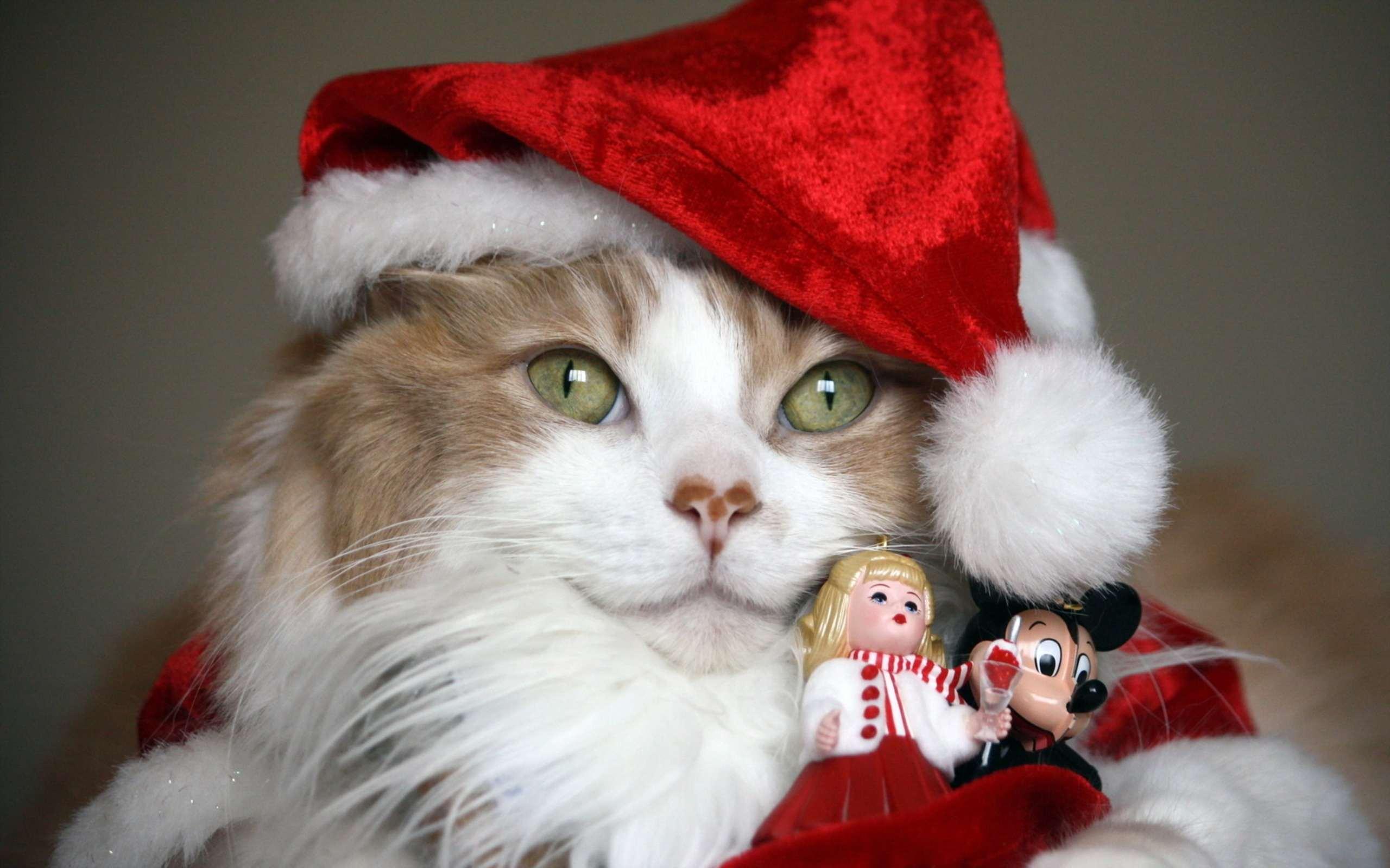 Сибирская кошка в новогоднем костюме