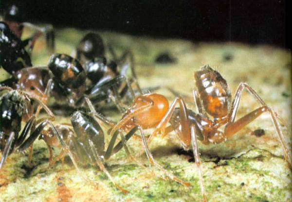 Самые древние животные фото Самые древние животные живущие ныне  Муравьи фото насекомые фотография