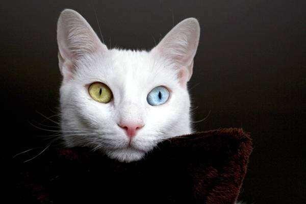 Необычные картинки с котами