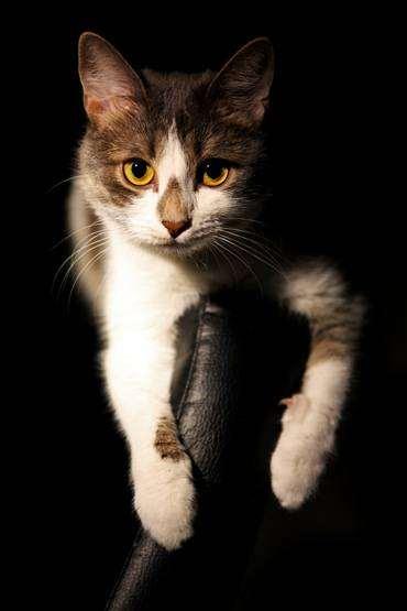 Кошка, фото путешествия поездки с животными, фотография