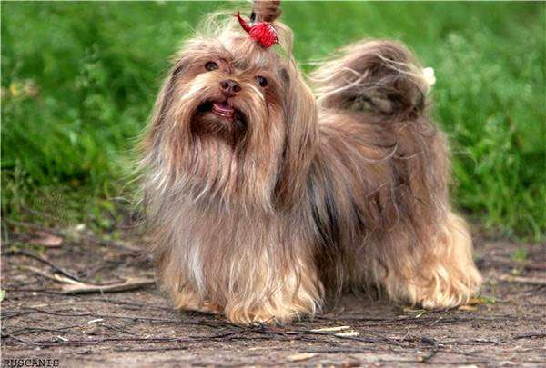 Картинка собачка маленькая