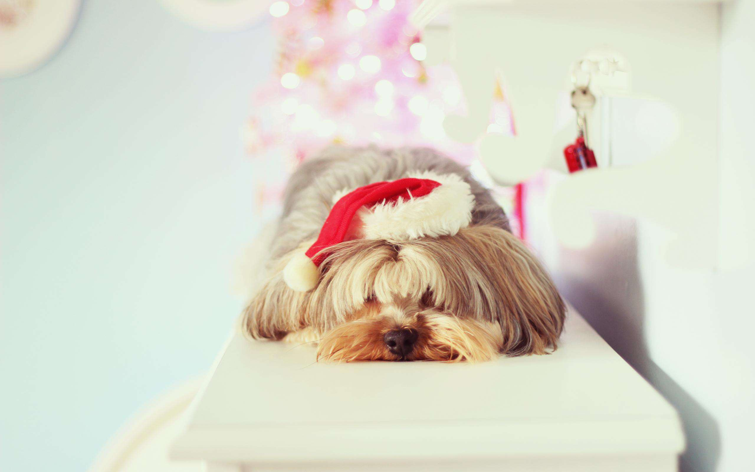 собачка в новогодней шапочке  № 1301994 бесплатно