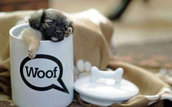 Щенок пекинеса в кружке, фото кормление собак щенков фотография картинка